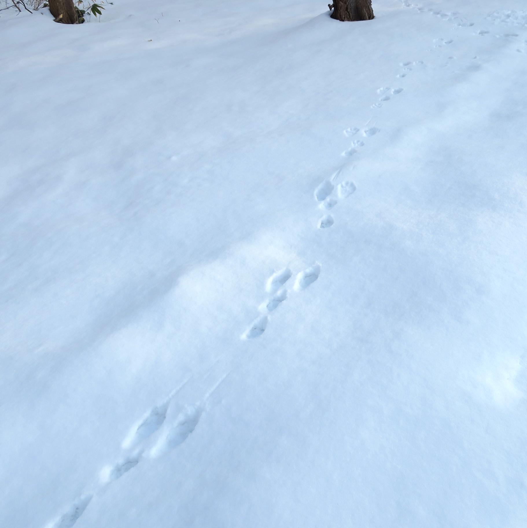 自然観察会<br>雪の森で足跡を探そう
