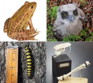 北海道自然史研究会2015年度大会