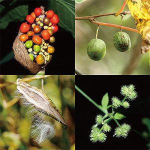 自然観察会 木の実・草の実の大ぼうけんをたどろう