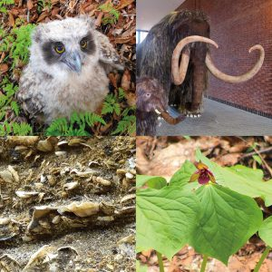 ミュージアムカレッジ<br>野幌周辺の動植物を探る~化石から現在まで~