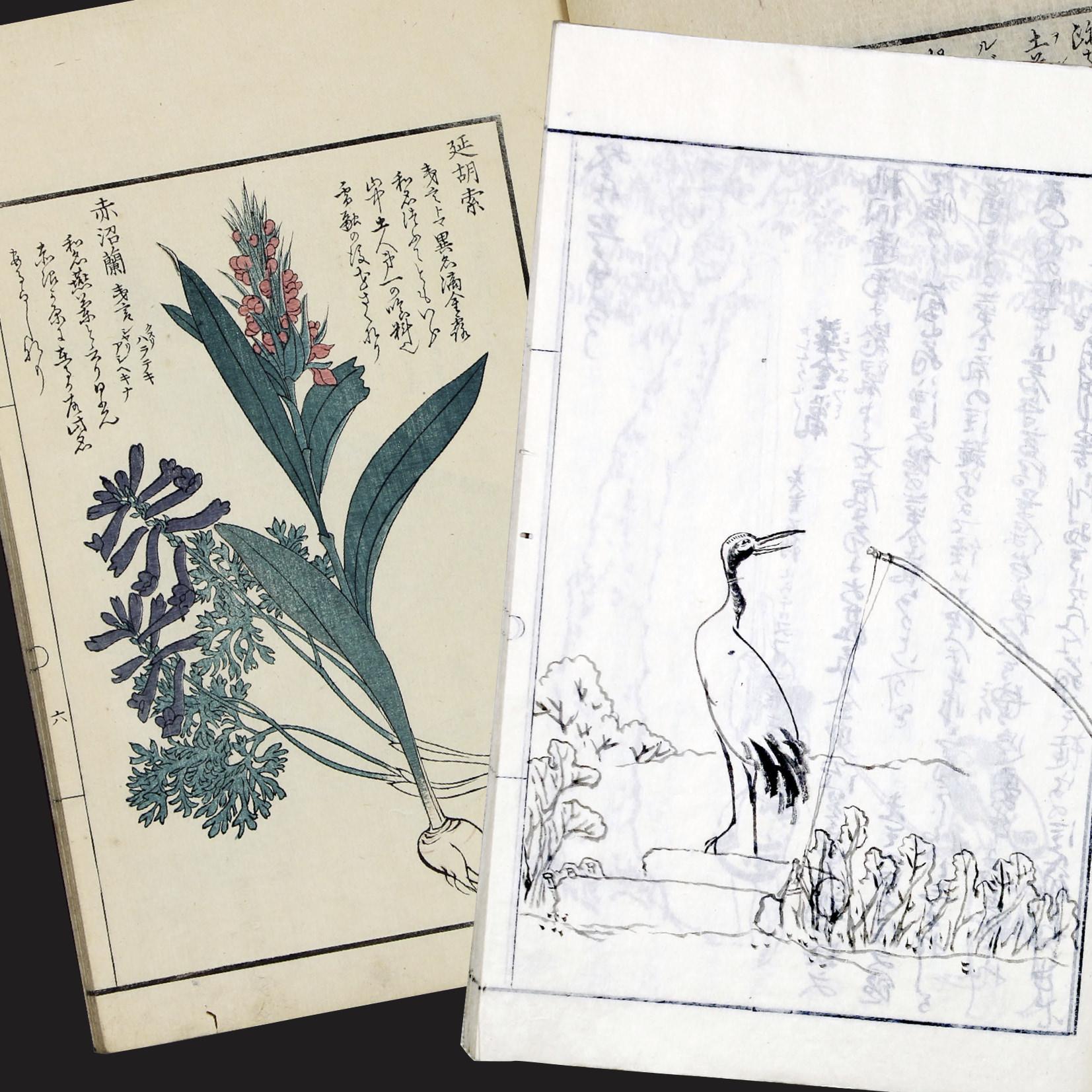 ミュージアムカレッジ<br>武四郎リレー講座 ①動物と植物のお話