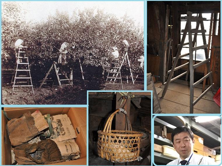 ミュージアムトーク<br>リンゴ農園で使われた道具のいろいろ
