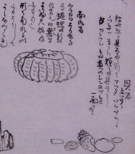 ミュージアムカレッジ<br>武四郎リレー講座 ③貝とアンモナイトのお話