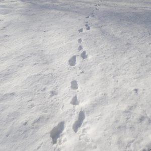 【中止】自然観察会<br>雪の森で動物を探そう!