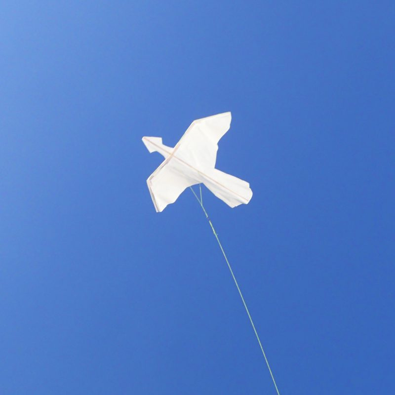 【受付終了】始祖鳥カイトを飛ばそう